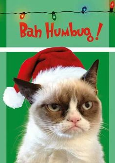 Bah humbug, says Grumpy Cat!