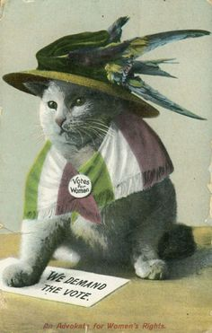 Clothed Cats   suffragette kitty Vote Des Femmes 66dc04f91