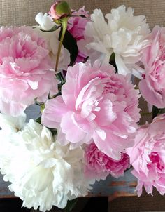 Peonies. June blooms.