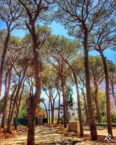 Peaceful escape in the enchanting nature of #Brummana 🌿 By @rogergaspar1 #WeAreLebanon  #Lebanon