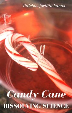 Dissolving Candy Canes Christmas Science Experiment. Christmas STEM activity with candy. Simple kitchen science.