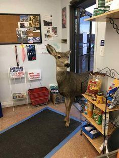 doe came after the cake, Colorado USA, foto Lori Jones fb., waw1-1xx.fbcdn.net
