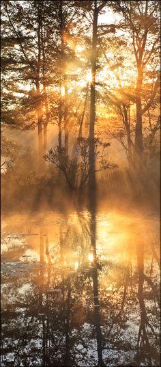 Golden Fog,  Harvard Pond, Petersham, Massachusetts by Patrick Zephyr