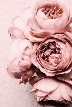 Ideas Flower Wallpaper Iphone Backgrounds Inspiration For 2019 Amazing Flowers, Beautiful Flowers, Beautiful Beautiful, Rose Background, Floral Backround, Iphone Background Pink, Beauty Background, Bunch Of Flowers, Flowers Garden