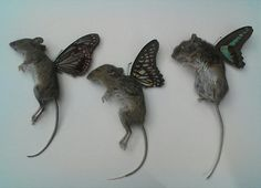 Mouse fairies.