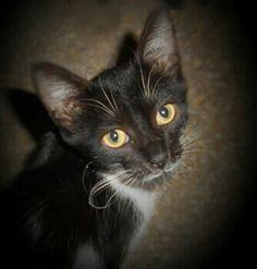Sezar le curieux chat qui n a peur de personne