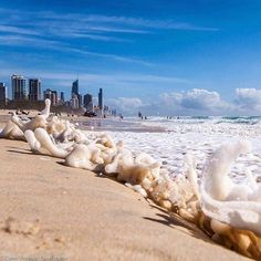 Hope you're all having a spectacular Easter long weekend! Sun is shining bright on Surfers Paradise beach today... Perfect way to finish off the break. Photo credit goes to @caseyeveleighphotography  #seascape #beach #ocean #oceanbeach #oceanview #oceanside #dining #surfersparadise #australia #surfersparadisebeach #goldcoastfinest #goldcoastbusiness #goldcoastgallery #queensland #beachfront #weekend #beachy #beachlife #summer #sun #bluesky by seascape_restaurant http://ift.tt/1PI0tin