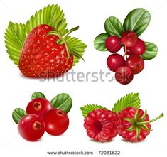 Photo-realistic vector illustration. Set of red berries with leaves. - Shutterstock Premier