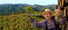 Cyprus Wine Routes