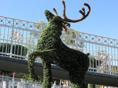 I am weirdly fascinated by topiaries  love this Reindeer.