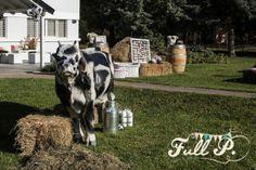 Fiesta de cumpleaños en la granja | Blog de BabyCenter