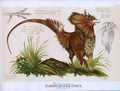"European Cokatrice, by Tony DiTerlizzi  From ""Arthur Spiderwick's Field Guide""."