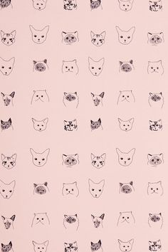 //Cats Wallpaper - Anthropologie.com//