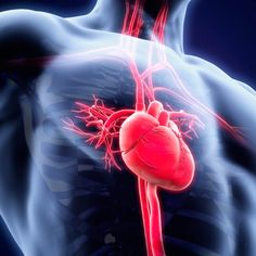 Improve Your Homocysteine Levels to Protect Your Heart but even nicer is the symptoms you get from lack of it Ventricular Tachycardia, Atrial Fibrillation, Cannabis, Rapid Heart Beat, Normal Heart, Metabolic Disorders, Heart Rhythms, Protect Your Heart, Heart Health
