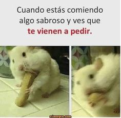 You are in the right place about wholesome Memes Here we offer you the most beautiful pictures about the Memes de amor you are looking for. When you examine the part of the picture you can get the mas Mexican Funny Memes, Funny Spanish Memes, Spanish Humor, Funny Animal Memes, Stupid Funny Memes, New Memes, Dankest Memes, Wholesome Memes, Chibi