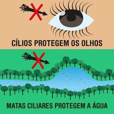 Para enfrentar as origens do problema, um grupo está realizando mutirões de plantio de árvores em mananciais de áreas proteção permanente na cidade.