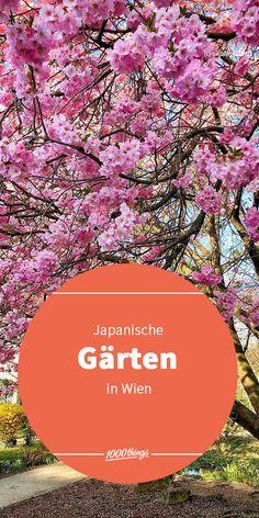 Japanische Gärten sind bekannt dafür, dass sie ihren Besuchern Ruhe spenden. In Wien gibt es einige Gärten mit fernöstlichem Flair.  Wo ihr euch in unserer schönen Stadt dafür hinbegeben müsst, verraten wir euch hier. Parks, Vienna, Japanese Rock Garden, Make A Donation, Garden Planning, City, Places, Parkas