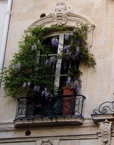 Parisian window with wisteria.