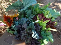 Mano Farm + Community Supported Agriculture + Food Justice