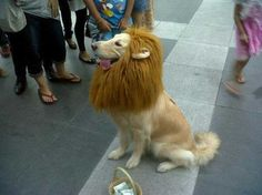No Really, I'm a Lion