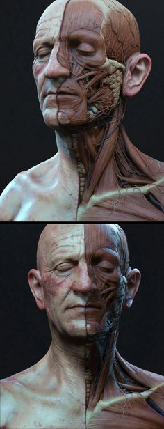 Anatomy Drawing Anatomía cabeza Más - This is just an update on my previous un-textured version. This was rendered in Zbrush and the comp was done in photoshop. Facial Anatomy, Head Anatomy, Anatomy Poses, Anatomy Study, Anatomy Art, Anatomy Drawing, Human Reference, Anatomy Reference, Art Reference