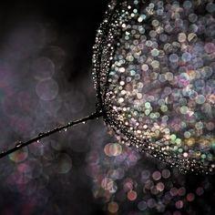 The magic of rainwater