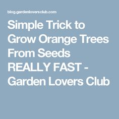 Simple Trick to Grow Orange Trees From Seeds REALLY FAST - Garden Lovers Club