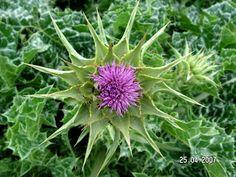 Holistic Medicine, Alternative Treatments, Home Remedies, Herbalism, Health Fitness, Plants, 30, Detox, Weight Loss