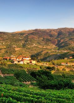 Duoro Wine Region, Portugal