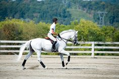 Time for the Hourglass: Part In the first section of our two-part series, top hunter/equitation coach Michael Dowling shares a creative jumping exercise for tuning up your position and track-riding skills. Cute Horses, Horse Love, Beautiful Horses, Hunter Under Saddle, Hunter Horse, Cute Horse Pictures, Horse Dance, Horse Exercises, Gypsy Horse