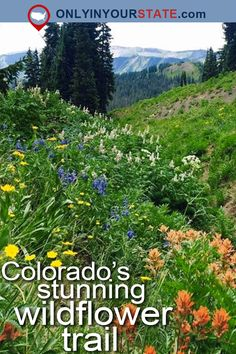 Travel   Colorado   Nature   Natural Wonders   Wildflowers   Hiking   Trails   Colorado Wildflower Trail   Explore   Adventure   Colorado Photography   Crested Butte   Gunnison National Forest   Parks   Forests   Flowers   Road Trips   Bucket List