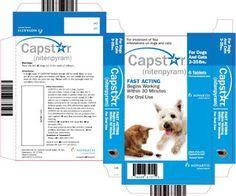 Capstar dog