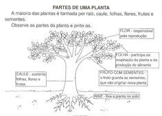 Partes_de_1_planta-1%C2%AA2%C2%AA.jpg (800×574)