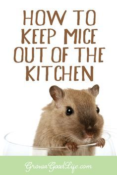 How You Can Control Hummingbird Feeder Pests Such as Ants, Bees and Wasps Mouse Deterant, House Mouse, Mice Control, Bug Control, Weed Control, Keep Mice Away, How To Deter Mice, Getting Rid Of Rats, Mice Repellent
