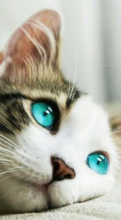 Untitled Cute Cats Cute Cats And Kittens Pretty Cats