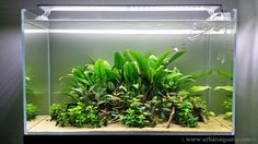 """Urban Aquaria: 64 Litre """"Hidden Paths"""" Tank - Week 16 Update"""