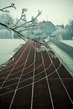 Snowy tracks - Don't know where this will go, but I want it.