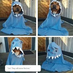 The Very Rare Dog-Shark