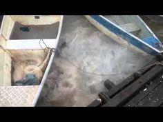 Así se ve cuando se arroja carne a un río infestado de pirañas   Galería   Vanguardia.com