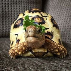 Plus they have zero chill. | 24 Reasons You Should Never Own A Tortoise