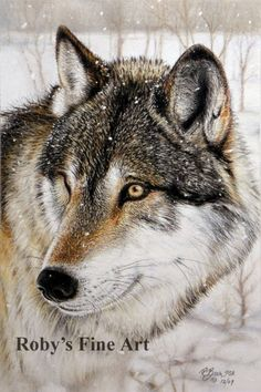Timber Wolf  Print Wildlife Giclee Art by Roby Baer by RobyBaer, $7.50