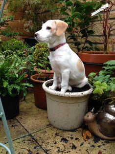 Pup in a pot !