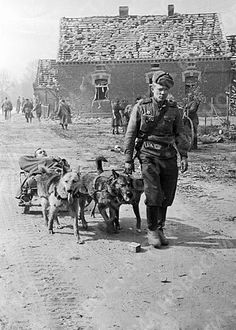 Wounded soldier of Soviet 1st Ukrainian Front being transported by a dog sled, Jun 1944