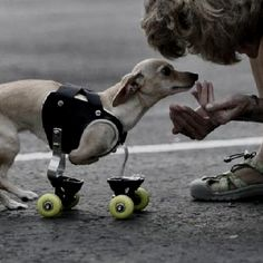From A Newly Created Page for Special Needs Animals