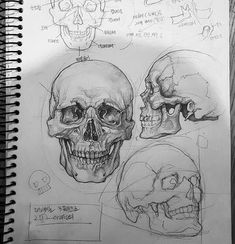 Excellent Pictures skull drawing tutorial Thoughts Desire to learn how to draw? You're in the proper place. Whether you're a starter trying to find Drawing Sketches, Art Drawings, Sketch Art, Sketching, Drawings Of Skulls, Realistic Pencil Drawings, Poster Drawing, Anatomy Sketches, Pencil Drawing Tutorials