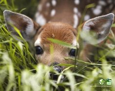 This just has to be Bambi ~❥