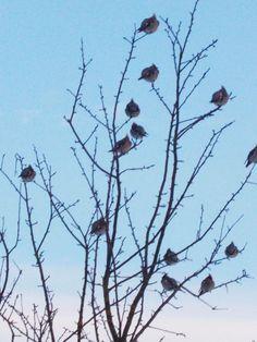 Uccelli vicino a Slonim in #Bielorussia