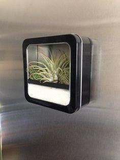 Air Plant Terrarium Magnet. Could we make these??  Materials:  Air Plant, Glue, Tin Box, Decorative Sand, Ribbon, Moss, Magnets