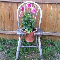 Old chair garden idea