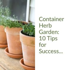 Let's grow a container herb garden! Here are 10 tips that will help you grow a productive and beautiful container herb garden! Let's grow a container herb garden! Here are 10 tips that will help you grow a productive and beautiful container herb garden! Container Herb Garden, Diy Herb Garden, Indoor Garden, Garden Pots, Indoor Plants, Herbs Garden, Patio Herb Gardens, Indoor Herbs, Kitchen Herbs